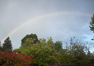 Rainbow in my backyard